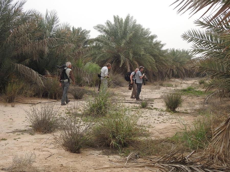In Abdaly Farms Searching for the babblers